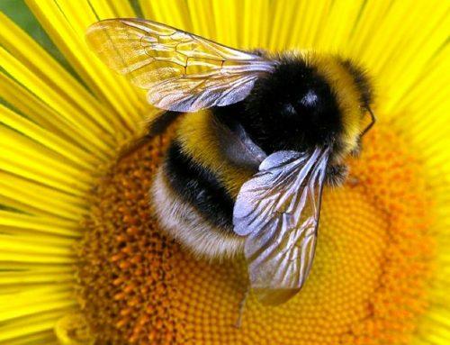 L'ape tra Dono e Sacrificio