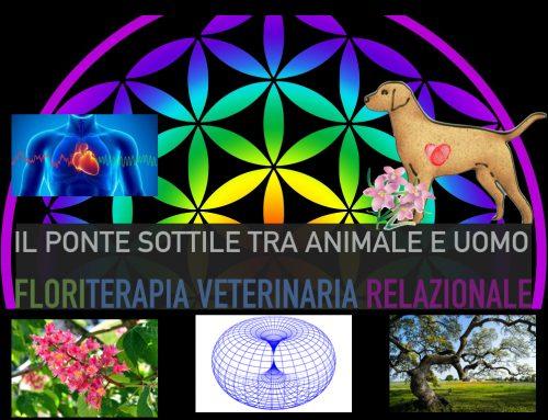 Floriterapia Veterinaria Relazionale: il Ponte Sottile tra Animale e Uomo