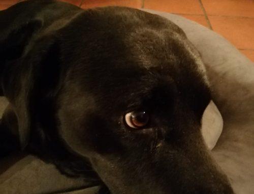 Dermatite da causa ignota nel cane